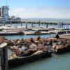 emotions (sea lions at pier 39)